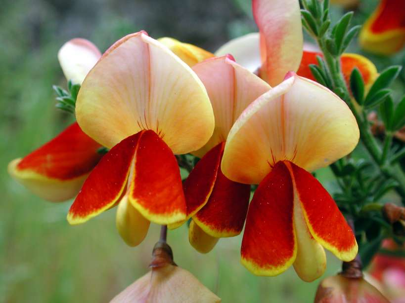 Yellow red flower gallery flower decoration ideas 27yellowredflowerg yellowred flower mightylinksfo mightylinksfo
